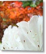 White Rhododendron Flowers Botanical Garden Prints Metal Print
