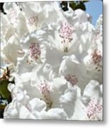 White Rhododendrons Flowers Art Prints Baslee Troutman Metal Print