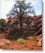 White Rim Overlook Trail Tree Metal Print