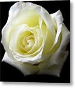 White Rose-11 Metal Print