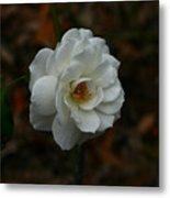 White Rose 209 Metal Print