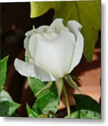White Rose After Rain 1 Metal Print
