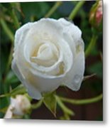 White Rose After Rain 2 Metal Print