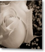 White Rose Bw Fine Art Photography Print Metal Print