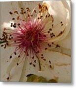 White Rose Centerpiece Metal Print