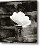White Rose In Black And White Metal Print