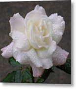 White Rose In Rain - 3 Metal Print