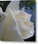 White Rose With Dew Drops Metal Print