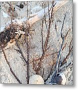 White Sand Beach Finds Metal Print