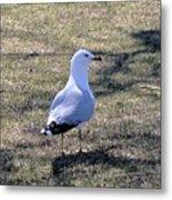 White Seagull Metal Print