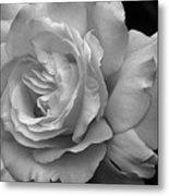 White Simplicity Rose Macro Metal Print