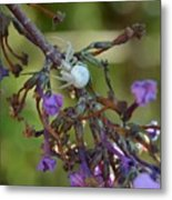 White Spider In Butterfly Bush Metal Print