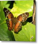 White Spotted Butterfly Metal Print