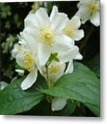 White Spring Blossom Metal Print