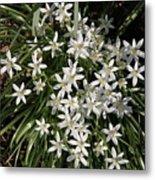 White Spring Flowers Metal Print