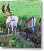 White Stag And Hind Metal Print