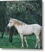 White Stallion In The Woods  Metal Print