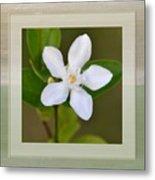 White Star Flower Metal Print