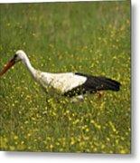 White Stork Looking Fr Frogs Metal Print