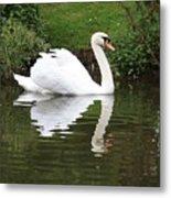 White Swan In Belgium Park Metal Print
