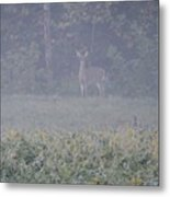 White Tail Deer Metal Print