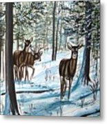 White Tail Deer In Winter Metal Print