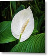 White Tail-flower Metal Print