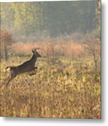 White Tail Morning Metal Print