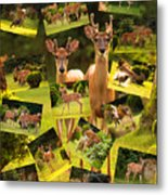 White-tailed Collage Metal Print