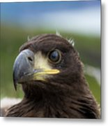 White-tailed Eagle #1 Metal Print