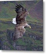 White-tailed Eagle Banks Metal Print