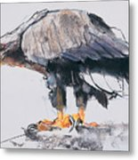 White Tailed Sea Eagle Metal Print