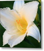 White Temptation Lily Metal Print