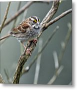 White Throated A Sparrow Metal Print