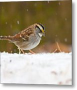 White-throated Sparrow Metal Print