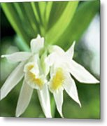 White Thunia Metal Print