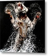 White Tiger Jumping In Water Metal Print