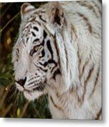 White Tiger Portrait 2 Metal Print