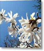 White Tree Flowers Art Prints Magnolia Blue Sky Floral Baslee Troutman Metal Print