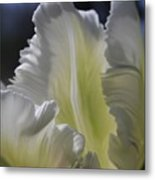 White Tulip 2 Metal Print