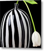 White Tulip In Striped Vase Metal Print