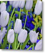 White Tulips Metal Print
