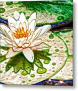 White Water Lilies Flower Metal Print