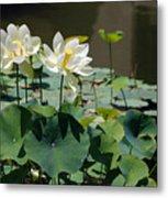 White Waterlilies Metal Print