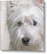 White West Highland Terrier Westie Metal Print