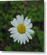 White Wild Flower  Metal Print