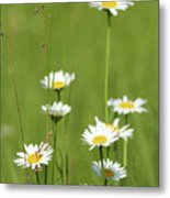 White Wild Flowers Nature Spring Scene Metal Print