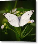 White Wings Of Wonder Metal Print