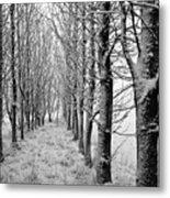 White Winter Pathway Metal Print