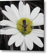 White With Bee Metal Print